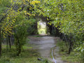 Bakıda ağacların insanla dərdləşdiyi yer var - FOTOSESSİYA: CƏMİYYƏT