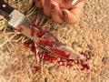 Bakıda bacısı tərəfindən öldürülən qızın FOTOsu: HADİSƏ
