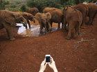 Fillər diyarında - FOTOSESSİYA: Fotosessiya