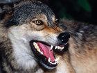 Canavarlar sürüyə hücum çəkdi: HADİSƏ