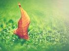 Payızın sehri - FOTOSESSİYA: Fotosessiya