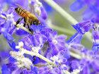 Gül nektarını sevənlər - FOTOSESSİYA: Fotosessiya