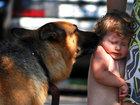 Uşaqlarda heyvan qorxusu: CƏMİYYƏT