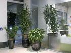 İş yerində bitki nəyə faydalıdır?: Maraqlı