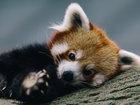 Tanış olun, Panda - FOTOSESSİYA: Fotosessiya