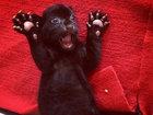 Çin zooparkında nadir hadisə - FOTO: Maraqlı