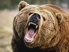 Şəki sakinlərini ayılar qorxuya saldı - YENİLƏNİB - VİDEO: HADİSƏ