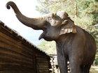 Fil 4 nəfəri öldürdü: Dünyada