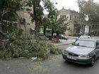 Bakıda külək ağacı yola yıxdı - FOTO: HADİSƏ