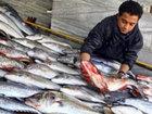 """""""Başçı bazarı""""nın 1 manatlıq dərdi: o balığı yeyən necə olur?: CƏMİYYƏT"""