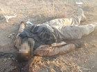 Kobani qırğınının FOTOları: Dünyada