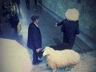 Bakıda polis çobanı yerin altından çıxartdı - FOTO: CƏMİYYƏT