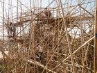 Bambukdan miqyaslı kompozisiya - FOTO: Fotosessiya
