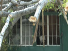 Güclü külək paytaxtda ağacları aşırdı - FOTO: HADİSƏ