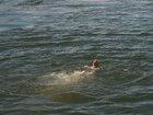 İki nəfər suda boğuldu: HADİSƏ