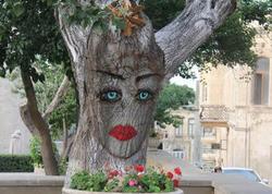 Bakıda qız ağacı - FOTO