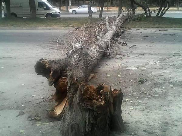 Bakıda ağac aşdı, yol bağlandı