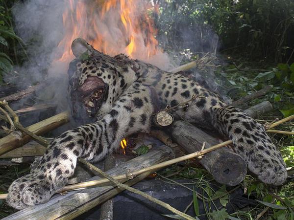 5 kəndlini yaralayanı parçalayıb yandırdılar - FOTO