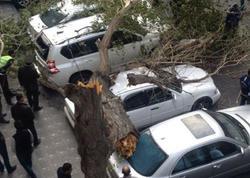 Bakıda ağac maşınların üstünə aşdı - FOTO