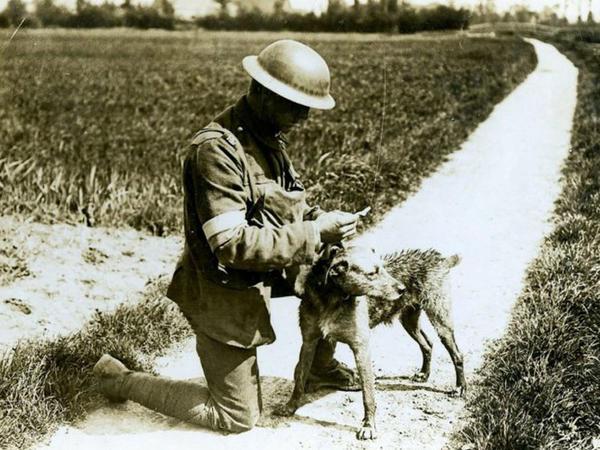1-ci Dünya Savaşının köpəkləri - FOTO