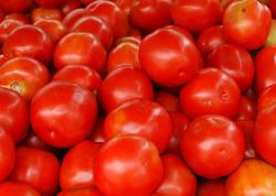 """Rusiyaya pomidor aparılmasında niyə problem yarandı? - <span class=""""color_red"""">RƏSMİ AÇIQLAMA</span>"""