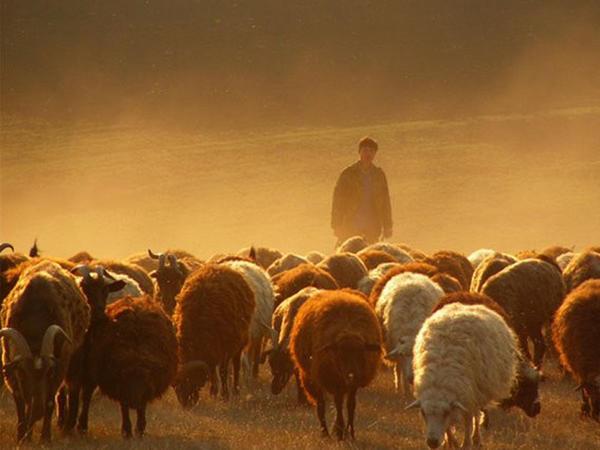 """Elektron """"çobanlar"""" iş başında - VİDEO"""