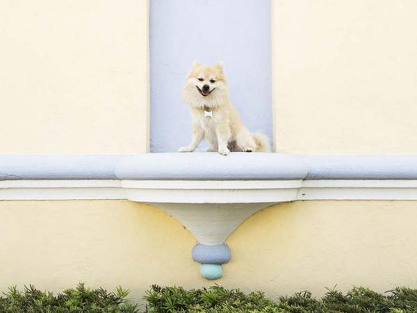 Q adlı köpək - FOTO
