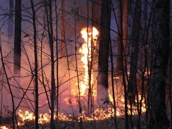 ABŞ-da meşə yanğınları: 13 ölü