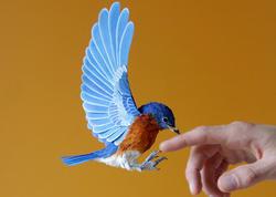 Kağızdan hazırlanmış quşlar - FOTO
