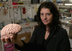Beynin daha bir sirri açıldı: Niyə bizdə inkişaf edib, meymunlarda yox?