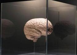Beyini yaşlanmaqdan qorumağın 6 yolu - FOTO