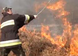 """""""Tüstü çıxan kimi başa düşdük"""" - İsmayıllıda meşə yandı - VİDEO - FOTO"""