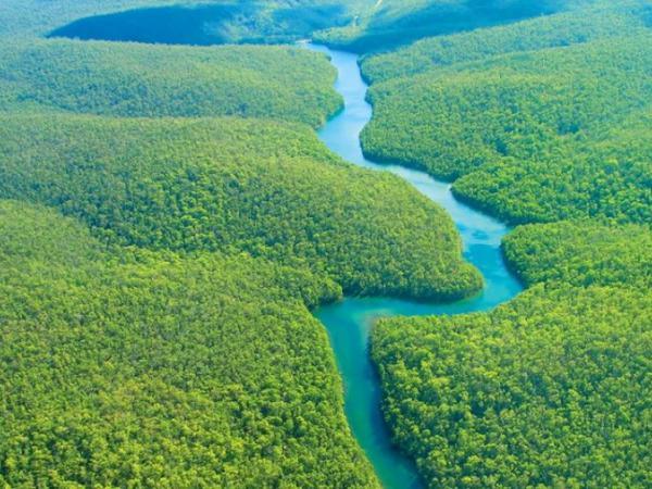 Planetimizdə meşə örtüyü hər il 13 milyon hektar azalır