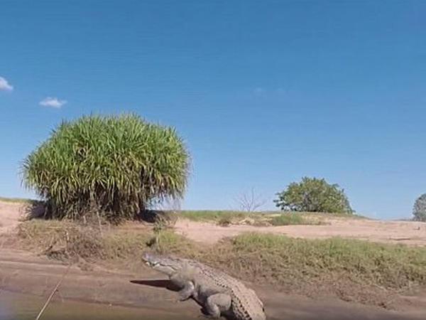 Balıqçılar sahildə şoka düşdü - VİDEO - FOTO