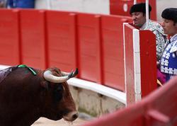 """Fransada korrida zamanı DƏHŞƏT - <span class=""""color_red"""">Öküz matadoru öldürdü</span>"""