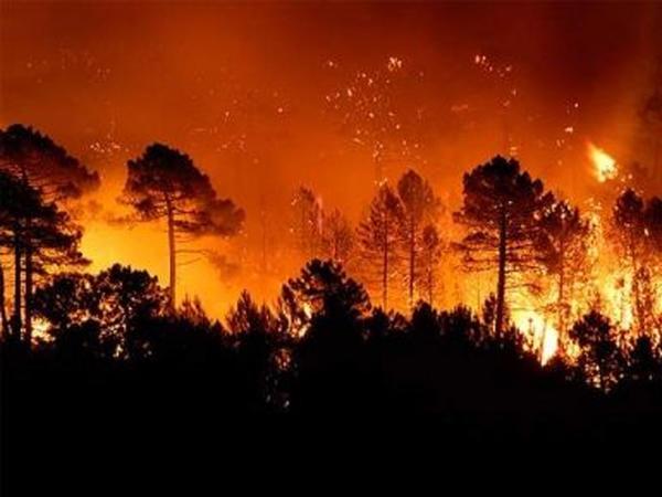 Rusiyanın Zabaykalye vilayətində meşələr yanır