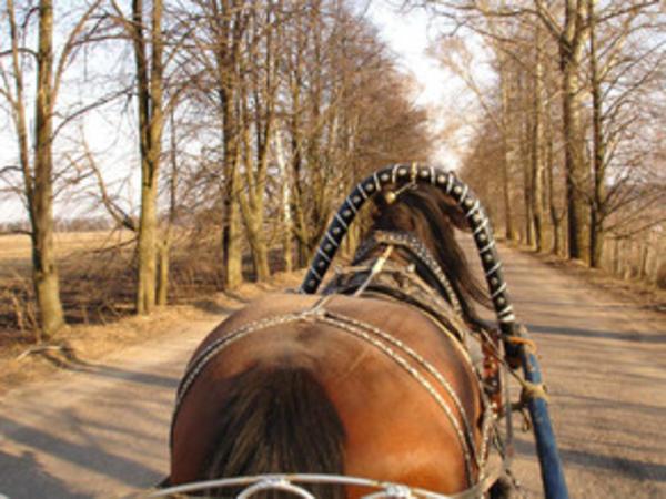 At arabası yol qəzasına səbəb olub, 1 nəfər yaralanıb