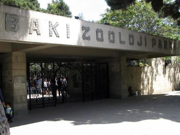 Bakı Zooparkına yeni heyvanlar gətiriləcək