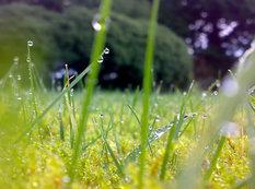 Güclü külək əsəcək, yağış yağacaq