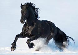 Heç kəsə demə ki, atımı necə oğurladın...