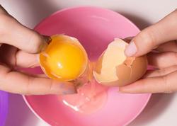 Yumurta ağının möcüzəsi