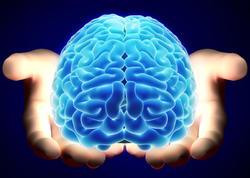 Alimlər beyni necə oyatmaq haqda xususi üslub hazırlayır