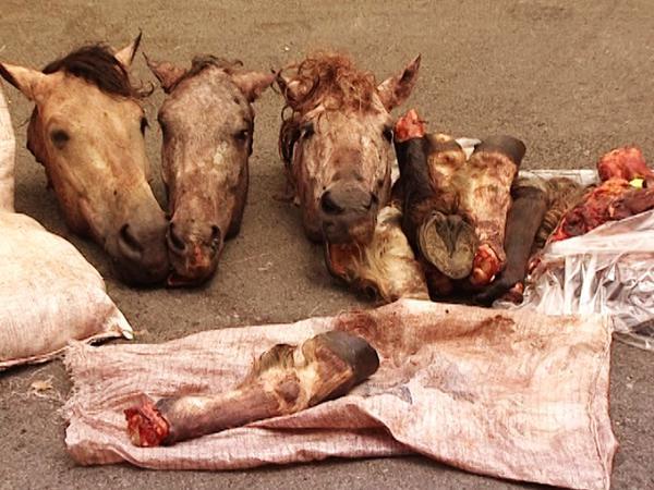 Bərdə sakininin həyətindən 600 kq at əti aşkar edildi