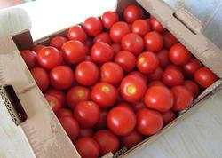 Pomidoru soyuducuda saxlamaq olmaz?