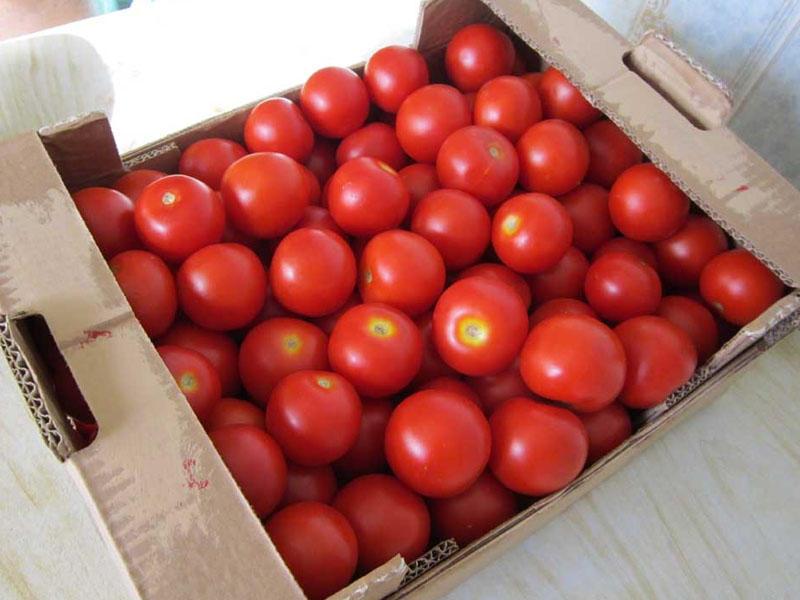 Azərbaycanda ötən il ən çox ixrac edilən pomidor olub