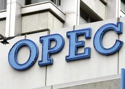 OPEC Azərbaycanda 2019-cu ildə neft hasilatına dair proqnoz dərc etdi