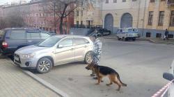 Rusiyada FTX binasına hücum:  2 ölü, 1 yaralı - YENİLƏNİB - TƏFƏRRÜAT - VİDEO - FOTO