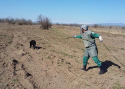Macarıstan Azərbaycana 100 min avro ayırdı