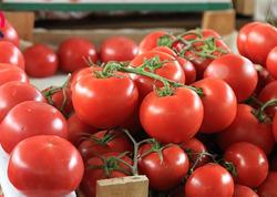 Pomidor ucuzlaşıb - VİDEO