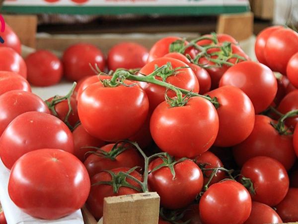 """Azərbaycandan Rusiyaya aparılan pomidorlarda TOMAT GÜVƏSİ <span class=""""color_red"""">xəstəliyi aşkar edildi</span>"""
